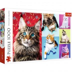 Puzzle Trefl 1000 Pisicute fericite